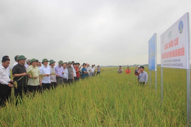 Quảng Trị: Phát triển nông nghiệp hữu cơ hướng đi mới để nông dân làm giàu - Ảnh 2.