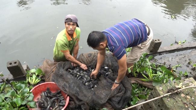 Hưng Yên: Trồng hồng cổ Sa Pa, nuôi con đặc sản dưới ao, lão nông thu nhập tiền tỷ - Ảnh 2.