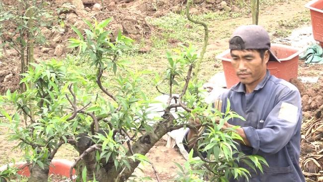 Hưng Yên: Trồng hồng cổ Sa Pa, nuôi con đặc sản dưới ao, lão nông thu nhập tiền tỷ - Ảnh 4.