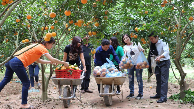 Bắc Giang: Tỉnh trung du miền núi hướng đến nằm trong top 15 tỉnh phát triển hàng đầu cả nước - Ảnh 5.