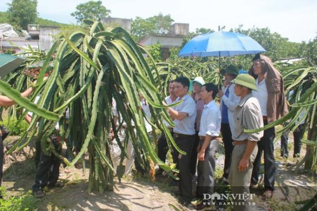 """Quảng Ninh: Nhân rộng mô hình """"nông dân dạy nông dân"""" theo phương thức """"cầm tay chỉ việc""""  - Ảnh 2."""