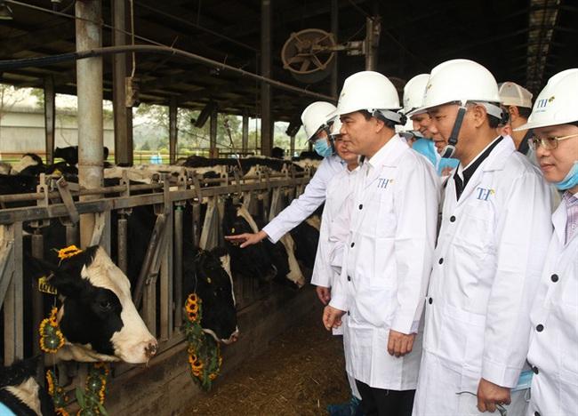 Dự án chăn nuôi bò sữa và chế biến sữa công nghệ cao tại Cao Bằng: Chìa khóa vàng mở cửa đất khó - Ảnh 1.