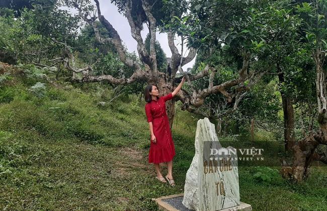 Yên Bái: Lùi thời gian tổ chức các lễ hội tại Suối Giàng do hoàn lưu cơn bão số 7 - Ảnh 2.