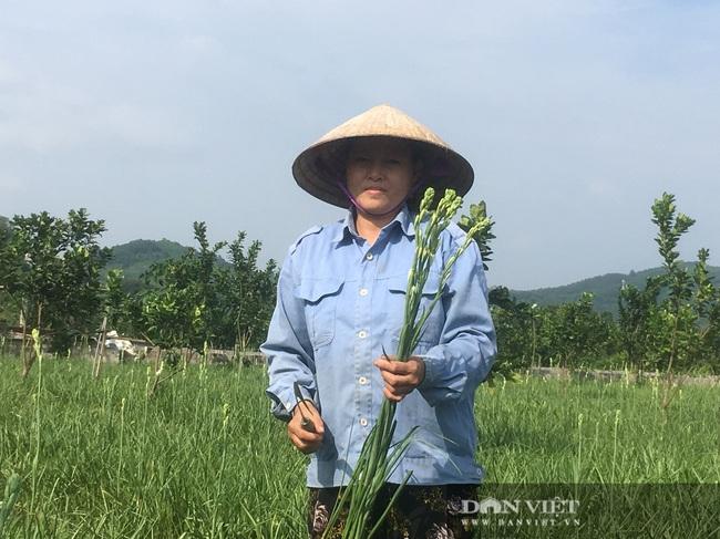 Trồng loài hoa chỉ nở về đêm, nông dân Thanh Hóa thu lời 100 triệu/ha/năm  - Ảnh 3.