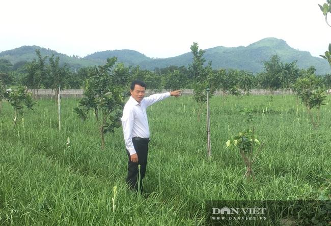 Trồng loài hoa chỉ nở về đêm, nông dân Thanh Hóa thu lời 100 triệu/ha/năm  - Ảnh 1.