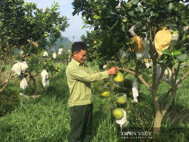 Trồng loài hoa chỉ nở về đêm, nông dân Thanh Hóa thu lời 100 triệu/ha/năm  - Ảnh 4.