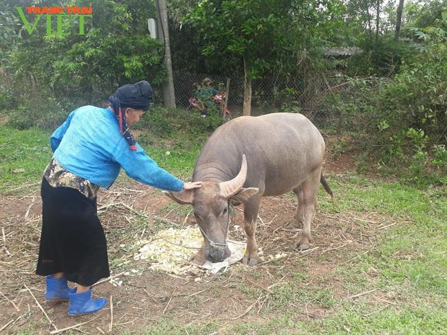 Tú Nang nỗ lực bảo vệ môi trường trong xây dựng nông thôn mới - Ảnh 2.