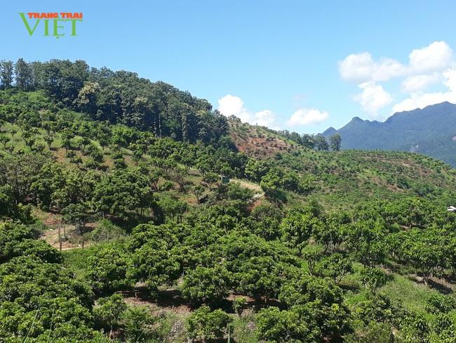 Tú Nang nỗ lực bảo vệ môi trường trong xây dựng nông thôn mới - Ảnh 3.