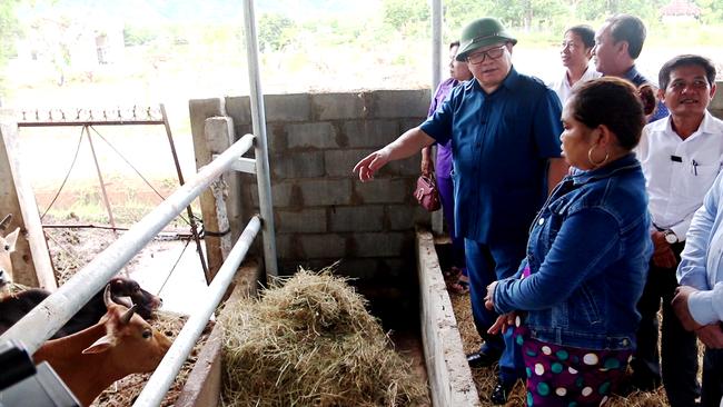 Phụ nữ Raglai nuôi bò sắm ô tô đời mới ở huyện miền núi Bác Ái (Ninh Thuận)  - Ảnh 1.