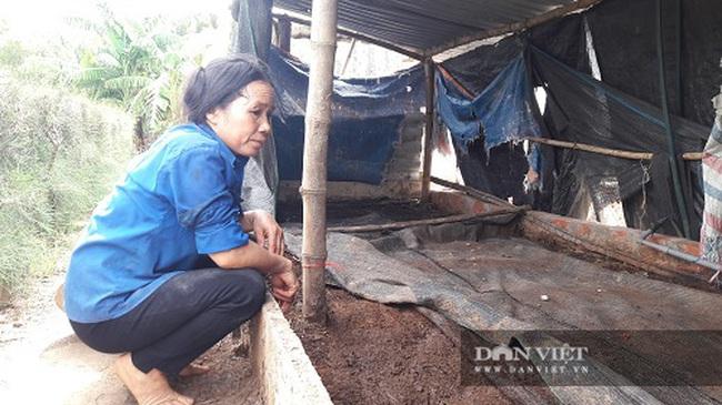 Hà Tĩnh: Nuôi con thích chui dưới đất, mỗi năm bỏ túi cả trăm triệu đồng - Ảnh 1.