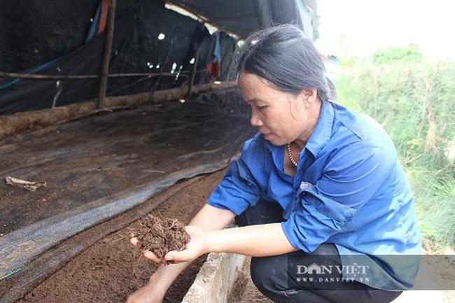 Hà Tĩnh: Nuôi con thích chui dưới đất, mỗi năm bỏ túi cả trăm triệu đồng - Ảnh 4.