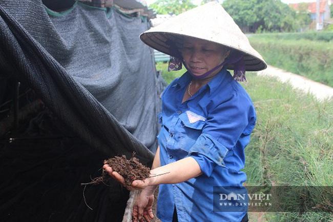 Hà Tĩnh: Nuôi con thích chui dưới đất, mỗi năm bỏ túi cả trăm triệu đồng - Ảnh 3.