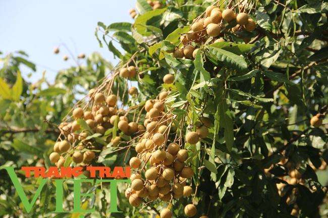 Thứ Trưởng NNPTN: Sơn La là một điển hình về trồng cây ăn quả - Ảnh 5.