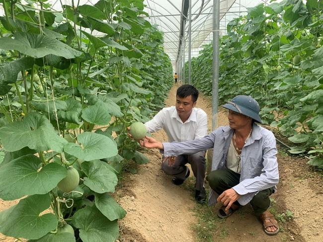 Bắc Giang: Trồng 5.000m2 mà hái được 15 tấn dưa lưới, ông nông dân này lãi 300 triệu/vụ - Ảnh 1.