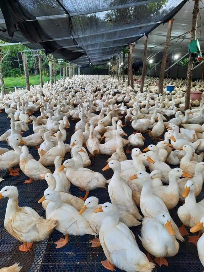 Giá gia cầm hôm nay 21/10: Giá gà thịt lông trắng bất ngờ tăng cao, người nuôi dễ thở - Ảnh 3.
