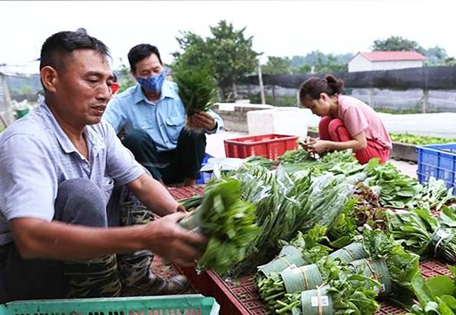 Hà Nội thúc đẩy xây dựng nền nông nghiệp hữu cơ: Quy hoạch vùng, hỗ trợ mặt bằng, giống... - Ảnh 1.