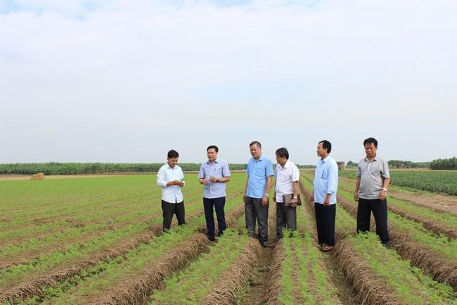 Nông sản có thương hiệu, nông dân tăng thu nhập - Ảnh 1.