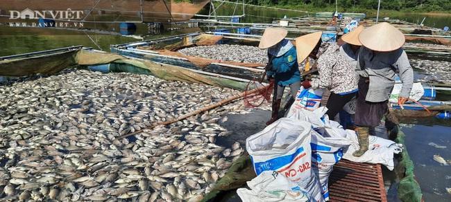 Điện Biên: Hơn 80 tấn cá lồng chết hàng loạt chưa rõ nguyên nhân - Ảnh 2.