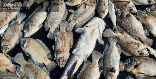 Điện Biên: Hơn 80 tấn cá lồng chết hàng loạt chưa rõ nguyên nhân - Ảnh 4.