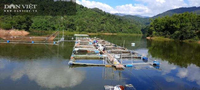 Điện Biên: Hơn 80 tấn cá lồng chết hàng loạt chưa rõ nguyên nhân - Ảnh 3.