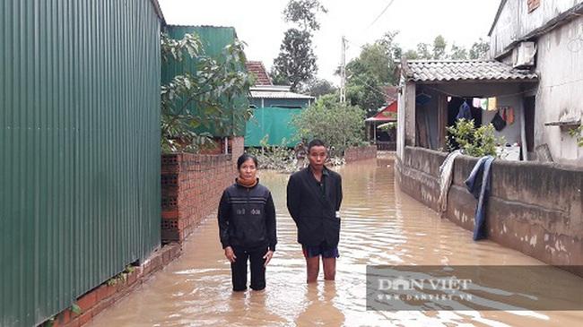 Hà Tĩnh: Người dân bất lực nhìn lúa ướt, trâu bò trôi theo nước lũ - Ảnh 7.