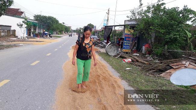 Hà Tĩnh: Người dân bất lực nhìn lúa ướt, trâu bò trôi theo nước lũ - Ảnh 5.