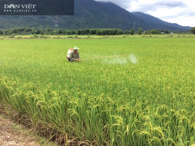 """Quy trình sản xuất """"gạo lạ"""" ngon sạch có giá đắt gấp 3 lần gạo thường - Ảnh 13."""