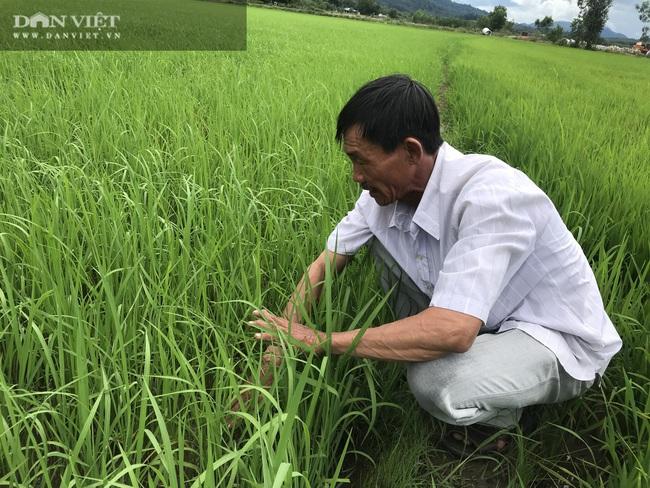 """Quy trình sản xuất """"gạo lạ"""" ngon sạch có giá đắt gấp 3 lần gạo thường - Ảnh 6."""