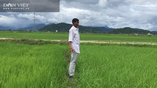 """Quy trình sản xuất """"gạo lạ"""" ngon sạch có giá đắt gấp 3 lần gạo thường - Ảnh 7."""