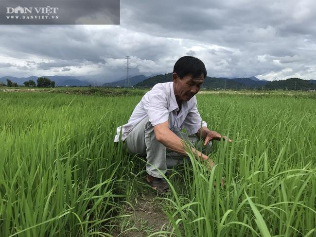 """Quy trình sản xuất """"gạo lạ"""" ngon sạch có giá đắt gấp 3 lần gạo thường - Ảnh 4."""