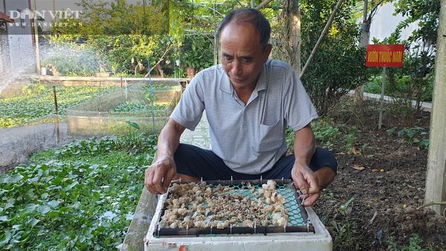 Ninh Bình: Chán cá cảnh chuyển sang nuôi đàn ốc béo ú ngắm chơi, lão nông kiếm trăm triệu/năm - Ảnh 6.