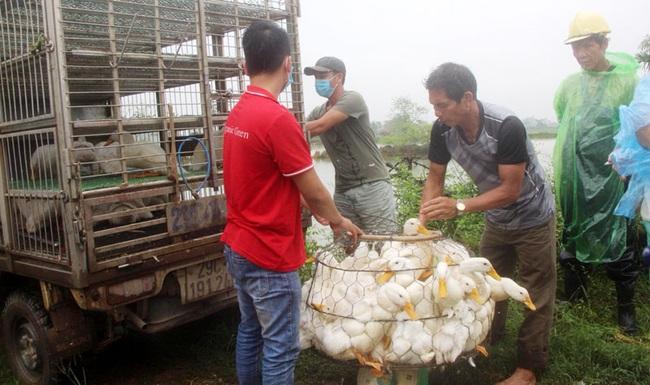 Giá gia cầm hôm nay 25/10: Nuôi gà, vịt theo cách này, nông dân khỏi lo đầu ra - Ảnh 1.
