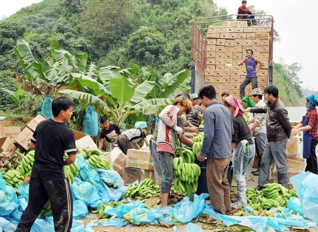 Loay hoay xử lý rác thải nhựa từ nông nghiệp  - Ảnh 2.