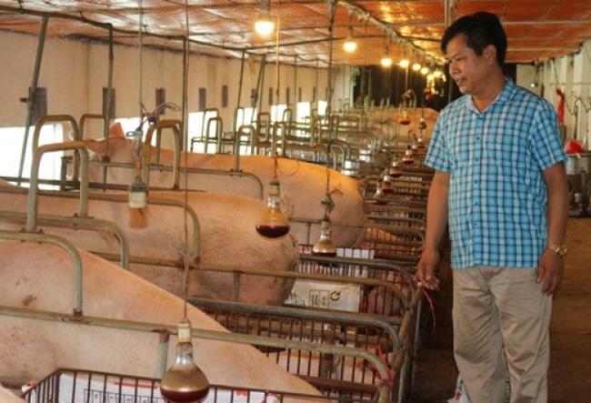 """Xã Cấn Hữu (Quốc Oai, Hà Nội): """"Đòn bẩy"""" kinh tế từ chăn nuôi  - Ảnh 2."""