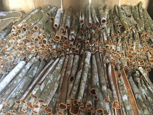 Lào Cai: Trồng thứ cây bán cả lá, cành lẫn vỏ, nông dân Bắc Hà thu gần 300 tỷ đồng - Ảnh 2.