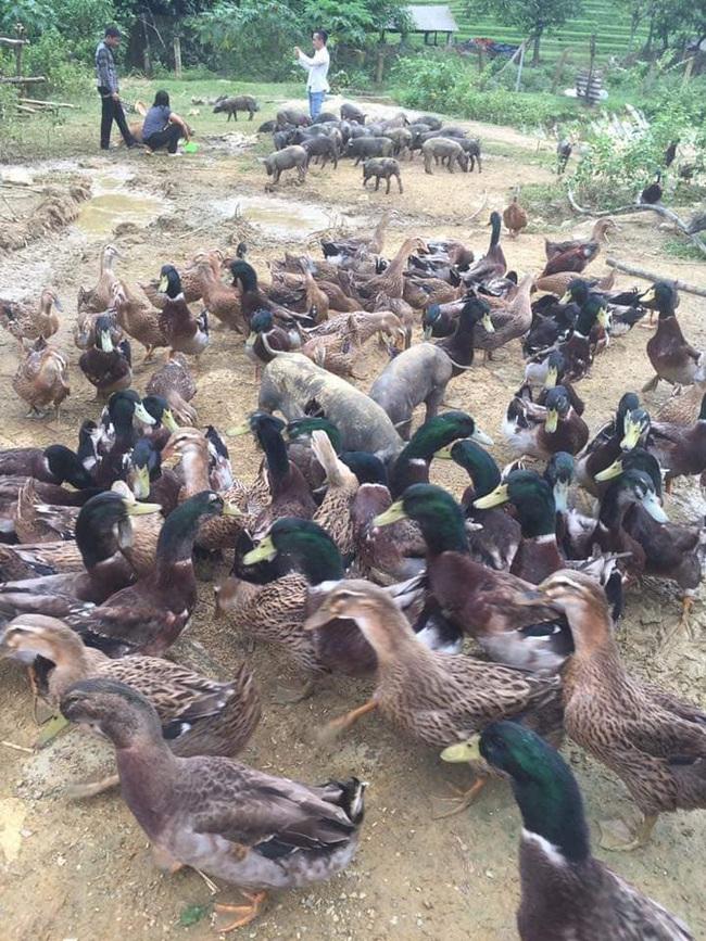 Giá gia cầm hôm nay 27/10: Giá gà thịt công nghiệp nhích lên, người nuôi chưa thoát thua lỗ - Ảnh 3.