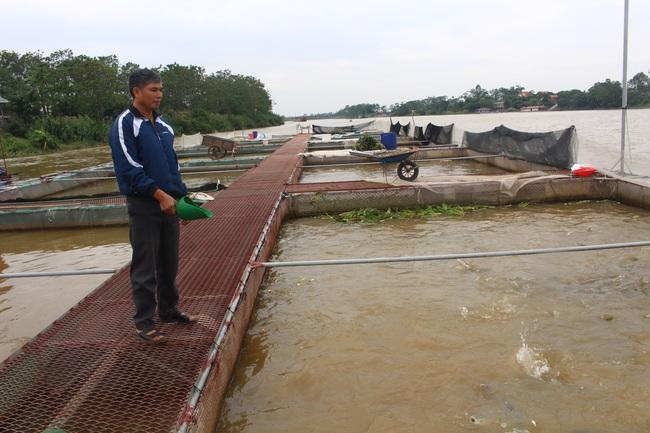Nhờ mô hình liên kết nuôi cá lồng đặc sản trên sông, nhiều nông dân Hưng Yên có thu nhập cao. Ảnh: Thu Hà
