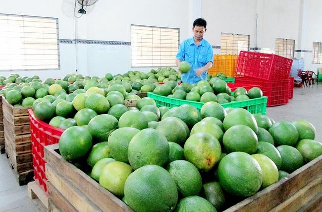 Bưởi Việt rộng đường xuất ngoại  - Ảnh 2.