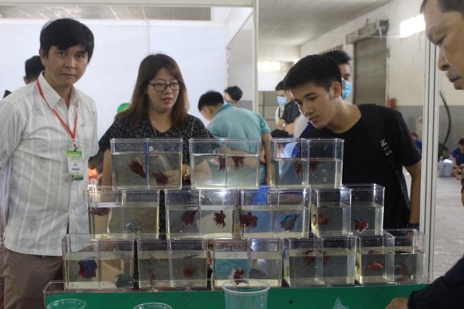 Gạo ST, nước mắm truyền thống, cá cảnh… hút người Sài Gòn tại hội chợ nông, lâm, thủy sản - Ảnh 3.