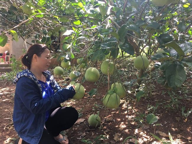Nghệ An: Bỏ cam trồng bưởi, bỏ nhím nuôi dúi ít ai ngờ mấy năm sau nông dân này trở thành tỷ phú - Ảnh 4.