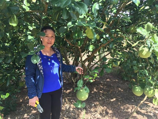 Nghệ An: Bỏ cam trồng bưởi, bỏ nhím nuôi dúi ít ai ngờ mấy năm sau nông dân này trở thành tỷ phú - Ảnh 2.
