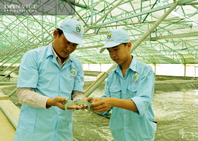 Bạc Liêu: 324 hộ nuôi tôm công nghệ cao, năng suất tăng hơn 10 lần so với nuôi thông thường - Ảnh 2.