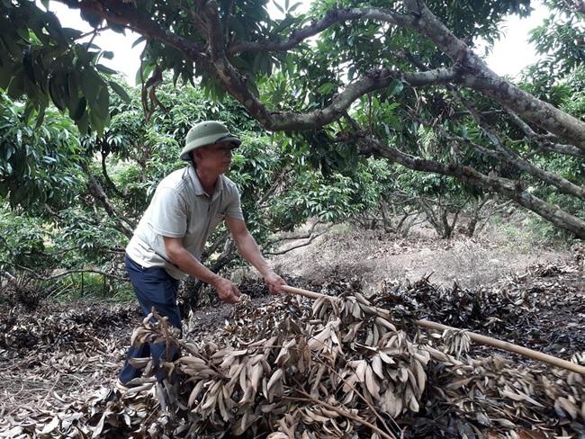 Viết nên kỳ tích đưa nông sản xuất ngoại - Ảnh 1.
