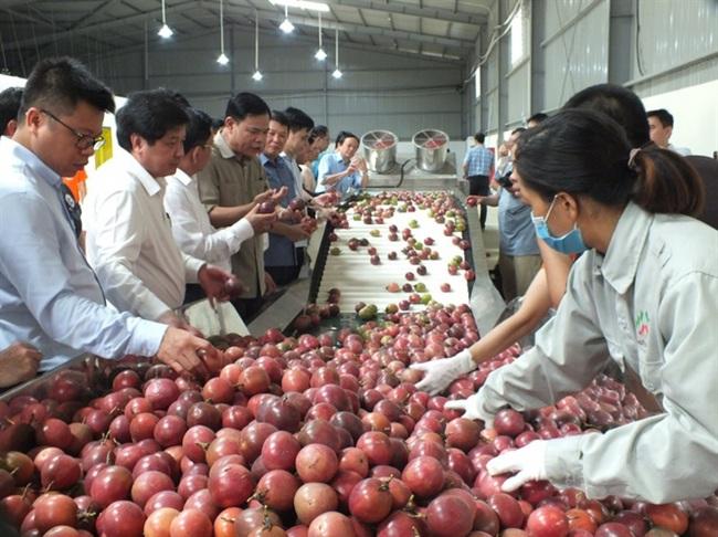 Viết nên kỳ tích đưa nông sản xuất ngoại - Ảnh 3.