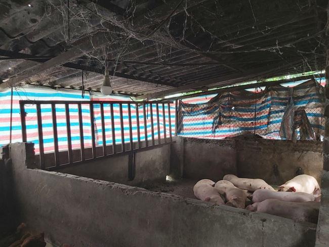 """Chật vật di dời chăn nuôi khỏi nội đô Hà Nội: Trở lại nơi đầu tiên """"nổ"""" dịch tả lợn châu Phi (Bài 1) - Ảnh 3."""