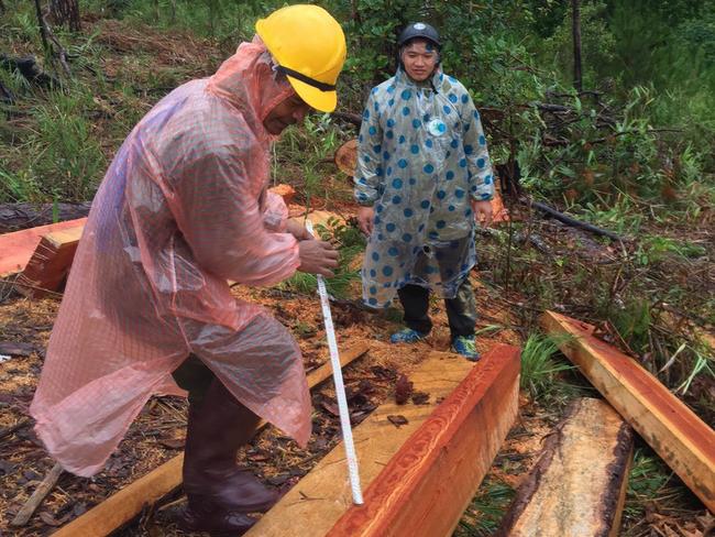 Lâm Đồng: Lại phát hiện vụ phá rừng nghiêm trọng, rộng hơn 2ha - Ảnh 1.