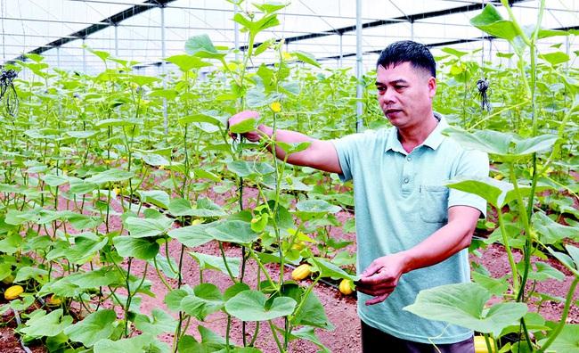 Khá giả nhờ áp dụng nông nghiệp công nghệ cao - Ảnh 1.