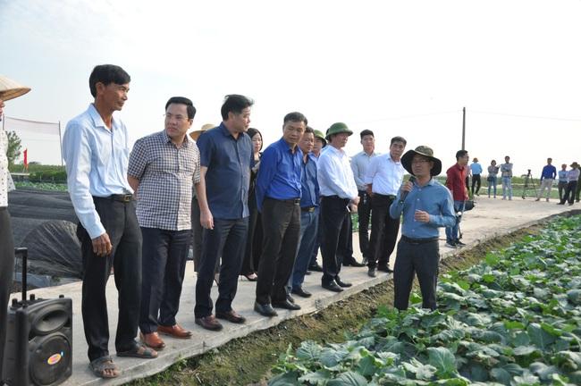 Sau chuyển đổi, thêm nhiều triệu phú trồng rau an toàn - Ảnh 1.