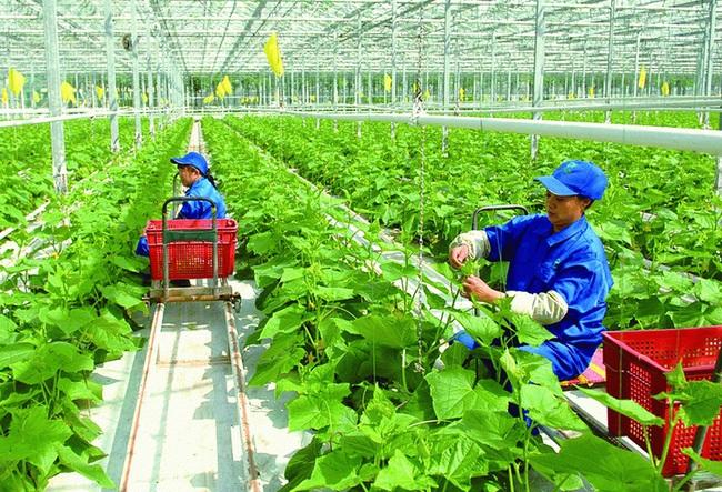 Khá giả nhờ áp dụng nông nghiệp công nghệ cao - Ảnh 2.