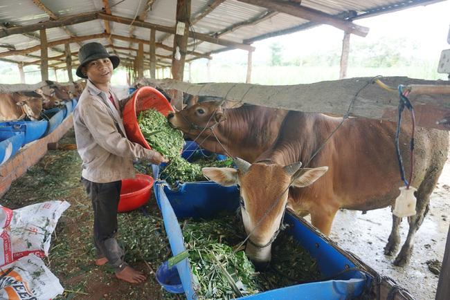 Huyện Chư Pứh (Gia Lai): Tái cơ cấu nông nghiệp, tăng cường liên kết chuỗi - Ảnh 1.